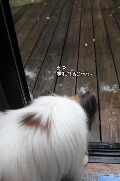 IMG_7570雨の日に遊ぶ雨の日に遊ぶ