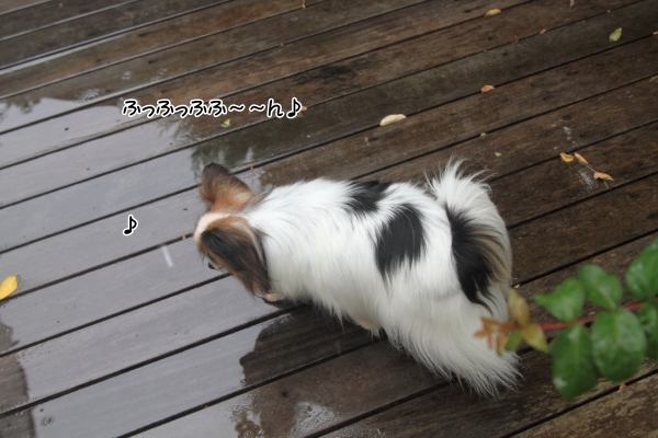 IMG_7573雨の日に遊ぶ雨の日に遊ぶ