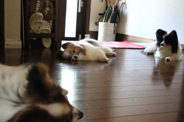 IMG_8153ほっこりほっこり犬