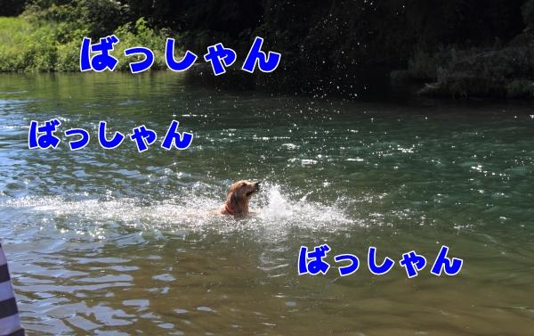 IMG_8286川遊び川遊び