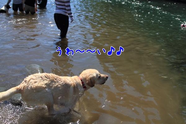 IMG_8288川遊び川遊び