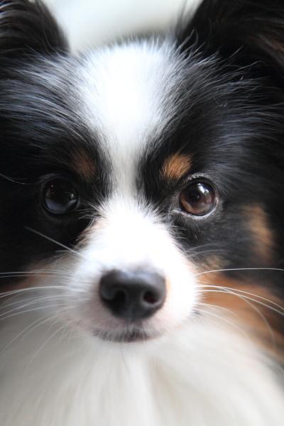 IMG_8485犬の顔犬の顔