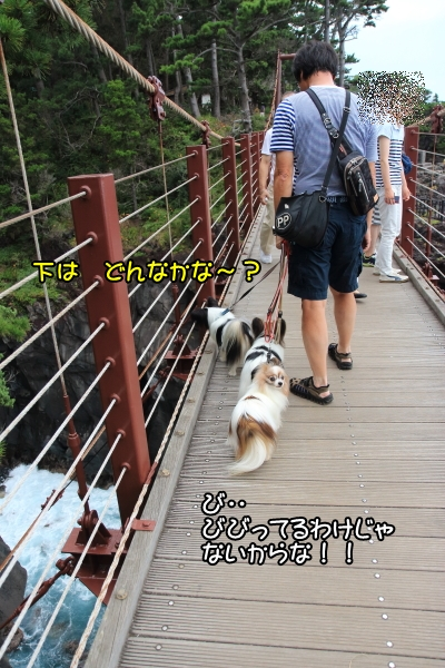 IMG_84132016年夏 伊豆旅行2016年夏 伊豆旅行