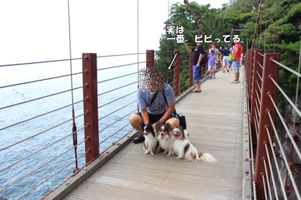 IMG_84202016年夏 伊豆旅行2016年夏 伊豆旅行