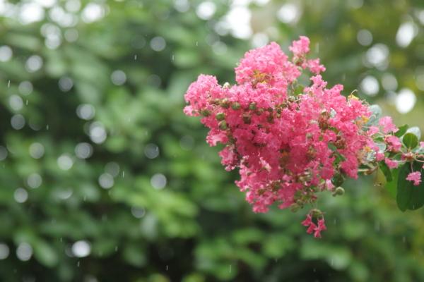 また雨また雨IMG_8853