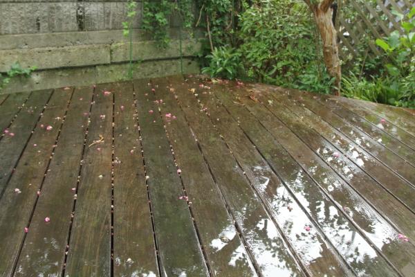また雨また雨IMG_8838