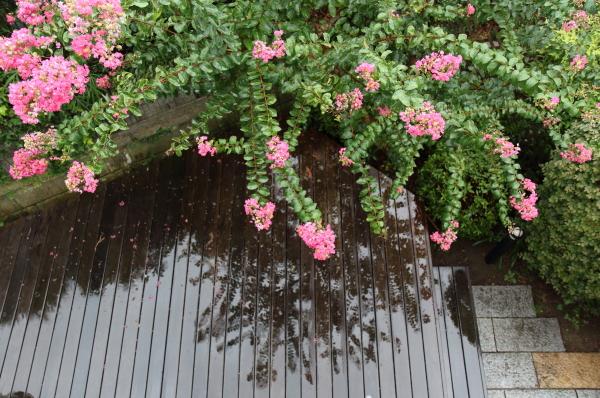 また雨また雨IMG_8468