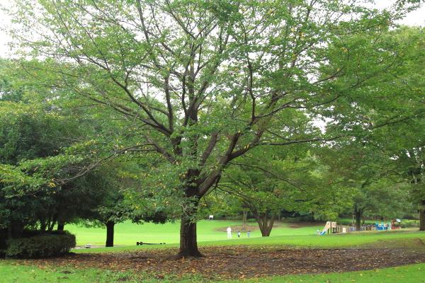 IMG_8571お月見 ふるさと公園お月見 ふるさと公園