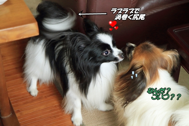 2016_09_30 ELFお里帰りIMG_9595