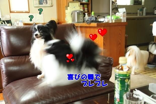 2016_09_30 ELFお里帰りIMG_9650