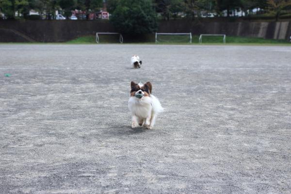 IMG_8658グランドでボール遊びグランドでボール遊び