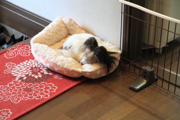 IMG_9874ベッドの犬達ベッドの犬達