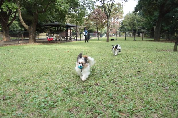 昭和記念公園コスモス201600007624