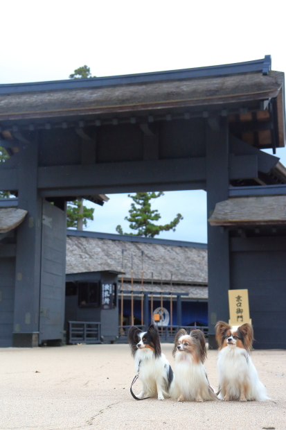 箱根 200007847