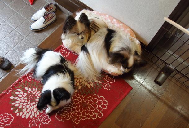 IMG_9505犬なべ2016犬鍋2016