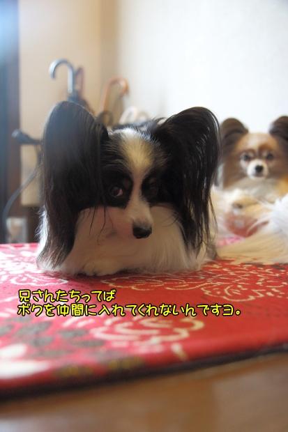 IMG_9507犬なべ2016犬鍋2016