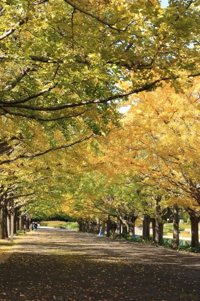 昭和記念公園 2016 秋00008465昭和記念公園 秋 2016