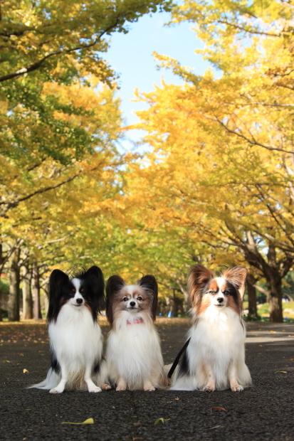 昭和記念公園 2016 秋00008462昭和記念公園 秋 2016