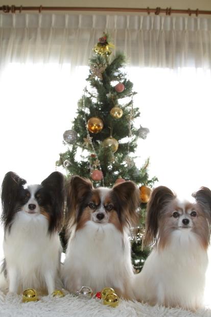 新しいクリスマスツリー00000525