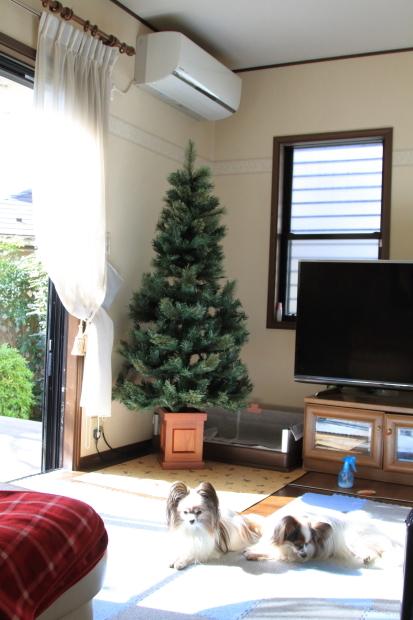 新しいクリスマスツリー00000494