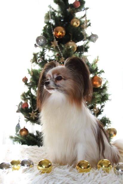 新しいクリスマスツリー00000501