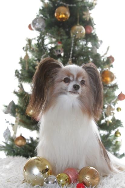 新しいクリスマスツリー00000532