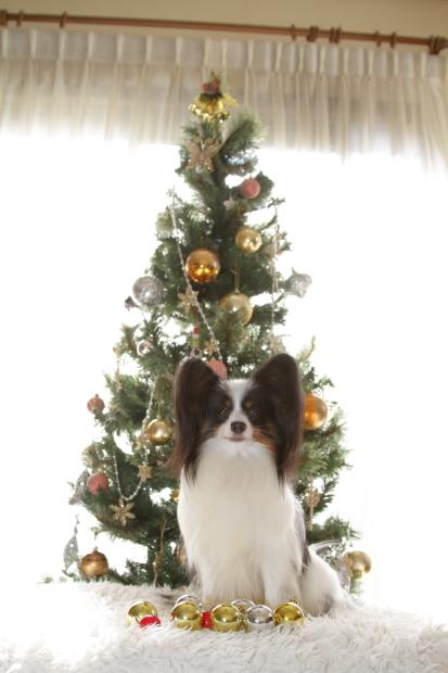 新しいクリスマスツリー00000519