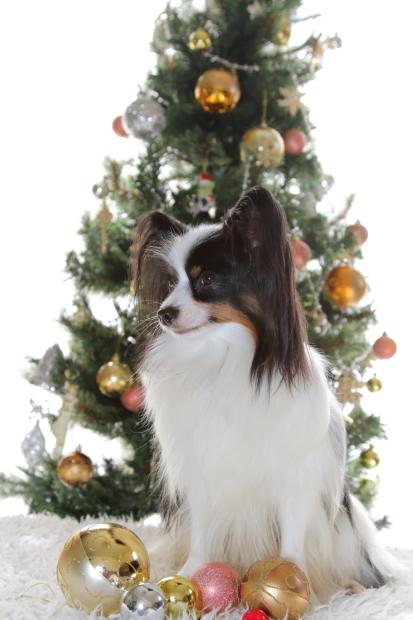 新しいクリスマスツリー00000548