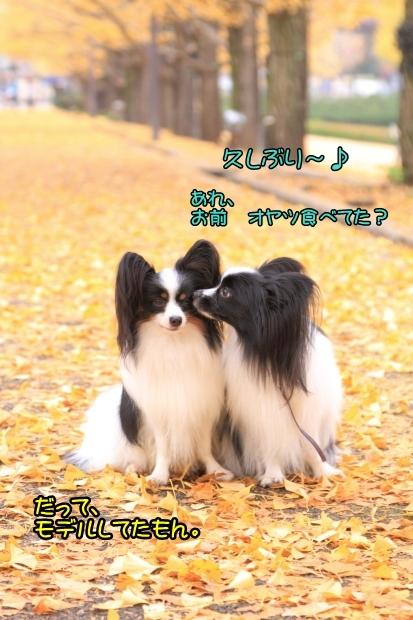 昭和記念公園 2016_11_210036昭和記念公園 2016イケメンコン