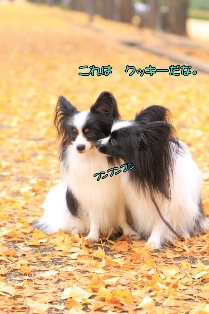 昭和記念公園 2016_11_210037昭和記念公園 2016イケメンコン