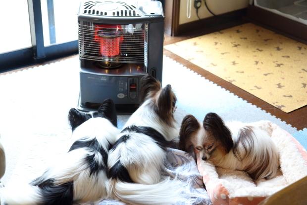 IMG_9519犬鍋2016犬 ストーブ