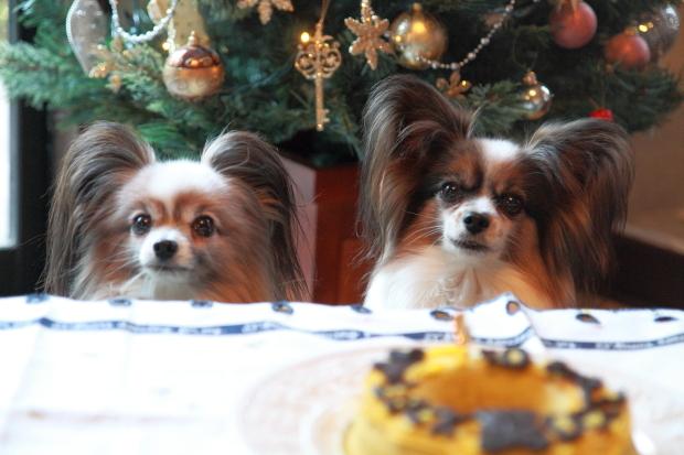 12月のカレンダー写真0008バースデイケーキ&クリスマス