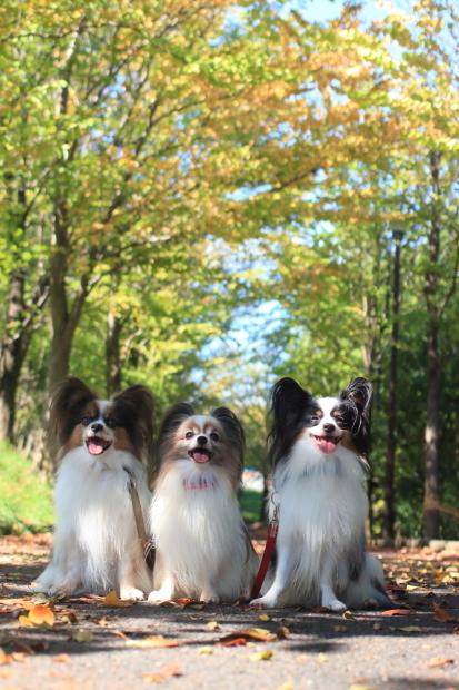 秋の公園散歩10月00007307