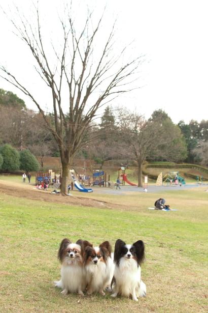年末のふるさと公園00008912
