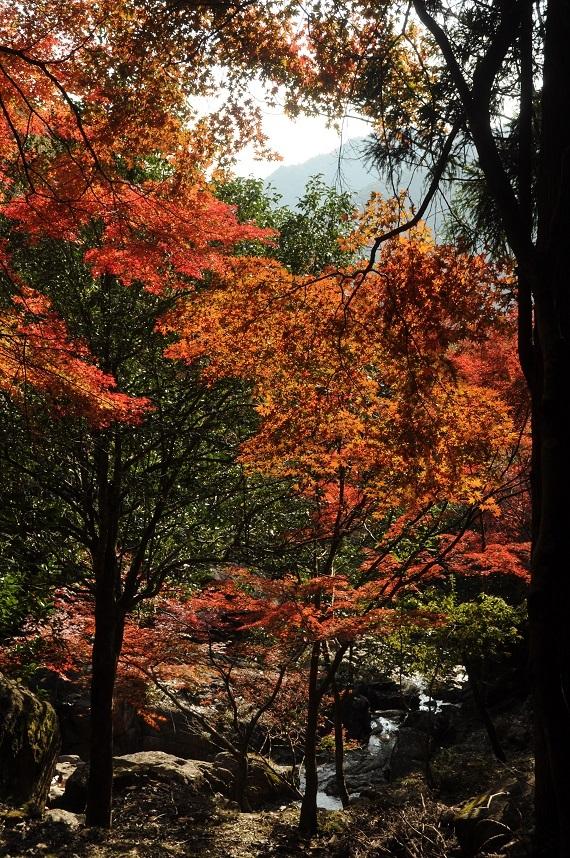 竹谷山16