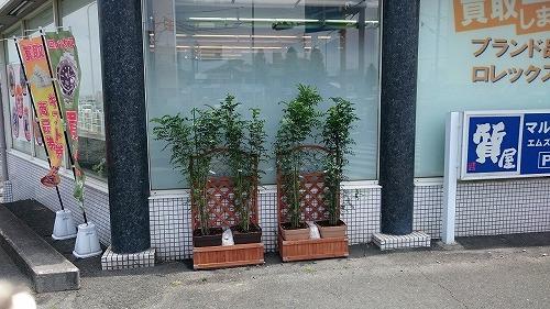 シマトリネコ2015 豊橋のマルハナ質店