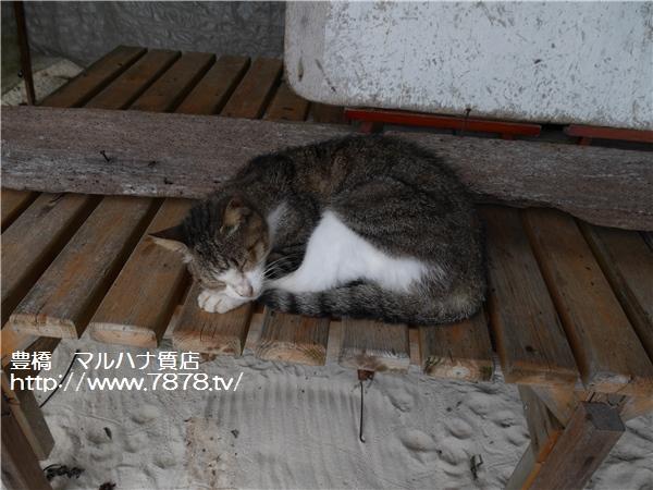 マルハナ質店・豊橋市 海辺で休む猫
