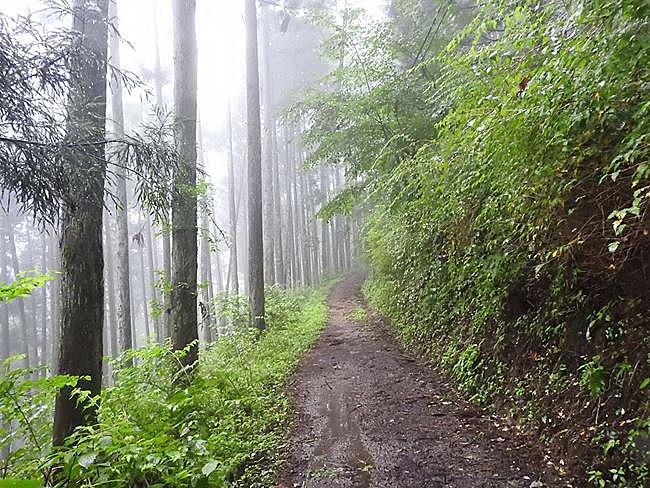 n 御岳ケーブルへ林道