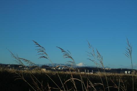 多摩川富士山