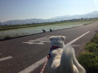 ある日の散歩
