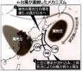 台風ルート