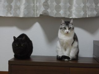メグとクレア