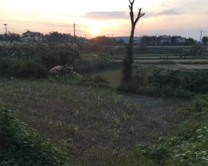 私の畑から西側を見る