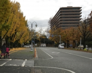銀杏県庁東門