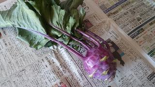 野菜収穫④16/11/12