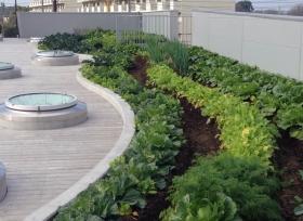 屋上菜園もりもり横