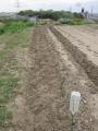 H28.4.13サトイモの種芋埋込み(50P)@IMG_8367