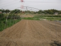 H28.4.25トマト用雨避け棚組立て@IMG_8471
