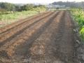 H28.10.15大根種蒔き予定地畝立て@IMG_9741