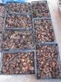 H28.12.16サトイモ収穫③(26k)@IMG_0170